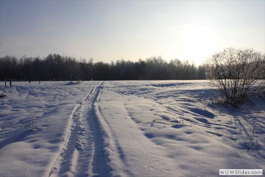 Meadow of Tournenvert
